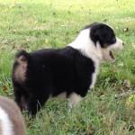 Eliza pup standing